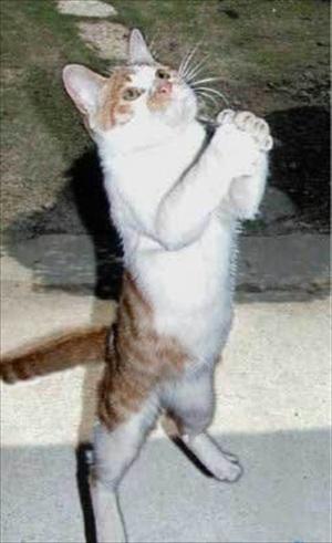 begging_cat-img-647